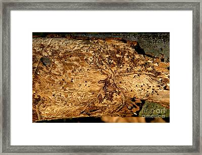 Framed Print featuring the photograph Worm Wood - 2 by Kenny Glotfelty