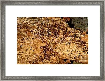 Framed Print featuring the photograph Worm Wood - 3 by Kenny Glotfelty