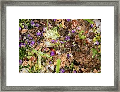 Worms And Slugs In A Compost Bin Framed Print