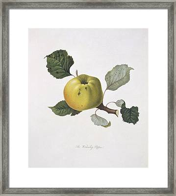 Wormsley Pippin Apple (1818) Framed Print
