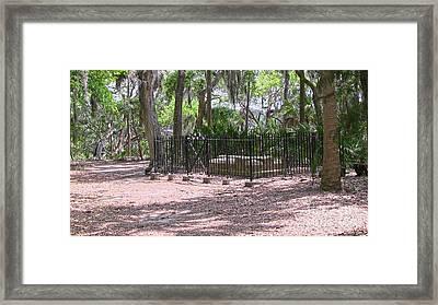 Wormsloe Cemetery Plot Framed Print by D Wallace