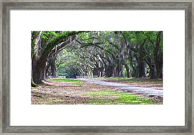 Wormsloe Drive 2 Framed Print by D Wallace