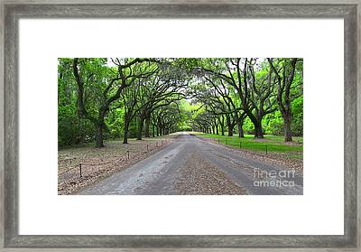 Wormsloe Drive Framed Print by D Wallace