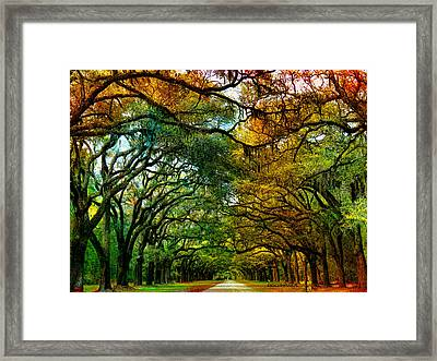 Wormsloe Plantation Framed Print by EricaMaxine  Price