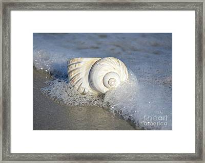 Worn By The Sea Framed Print by Kathy Baccari
