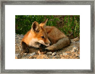 Worn Out From Chasing Squirrels Framed Print by Kristin Elmquist