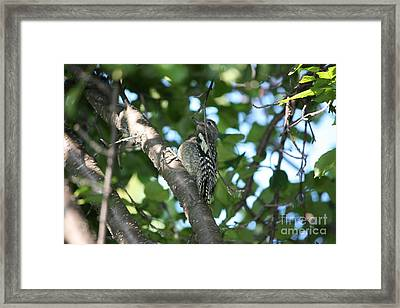 Worn Out Woodpecker Framed Print