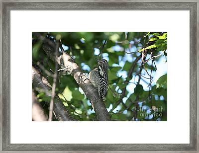 Worn Out Woodpecker Framed Print