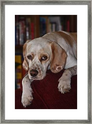Would You Abandon Me? Framed Print by Mark Alder