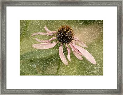 Wouldn't It Be Loverly Framed Print by Lois Bryan