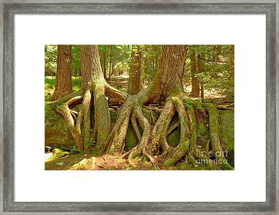 Wrapped In Roots Framed Print by Adam Jewell
