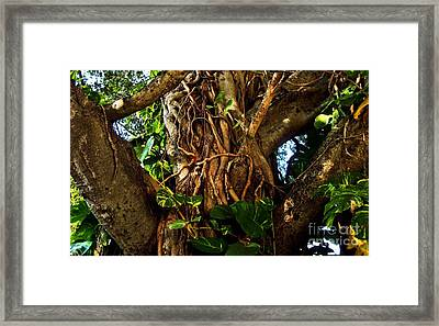 Wrapped In Vines Framed Print by Claudette Bujold-Poirier