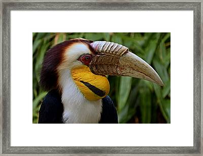 Wreathed Hornbill Framed Print by Eric Albright