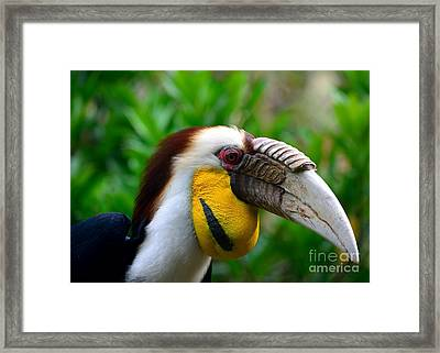 Framed Print featuring the photograph Wreathed Hornbill by Lisa L Silva