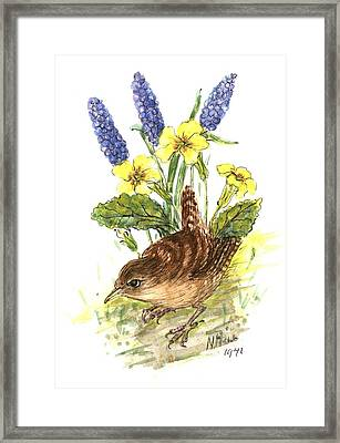 Wren In Primroses  Framed Print by Nell Hill