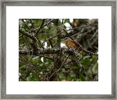 Framed Print featuring the photograph Wren by John Johnson
