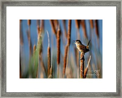 Wren Singing Framed Print