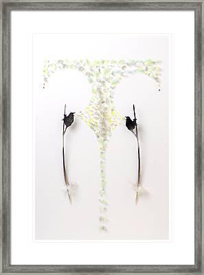 Wren Territory 2 Framed Print by Chris Maynard