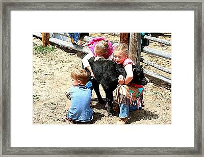 Wrestling Calves Framed Print