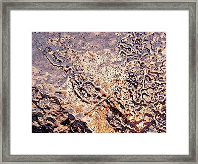 Framed Print featuring the photograph Wrinkled Beauty by Sami Tiainen