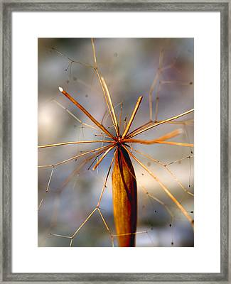 Framed Print featuring the photograph Wth? by Joe Schofield