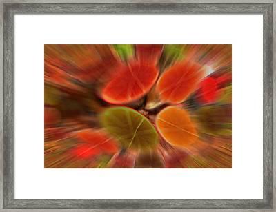 Wurf Framed Print