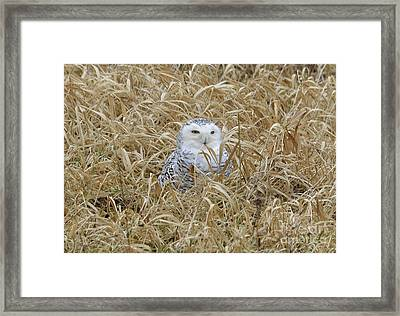 Framed Print featuring the photograph Wv Snowy by Randy Bodkins
