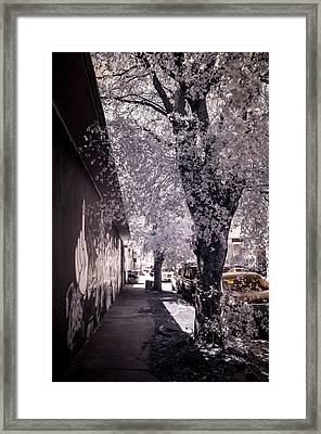 Wynwood Treet Shadow Framed Print