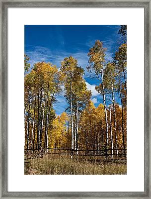 Wyoming Golden Fall Aspens Framed Print by John Haldane