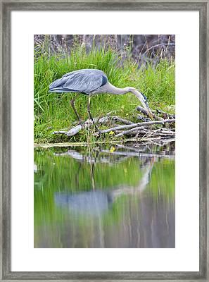 Wyoming, Grand Teton National Park Framed Print