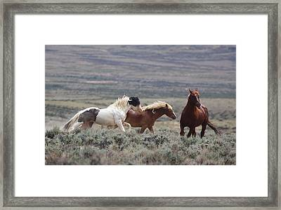 Wyoming Mustangs Framed Print