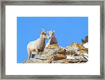 Wyoming, National Elk Refuge, Bighorn Framed Print