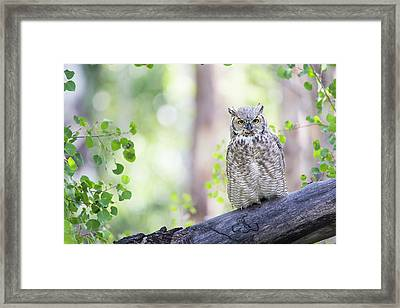 Wyoming, Sublette County, Great Horned Framed Print