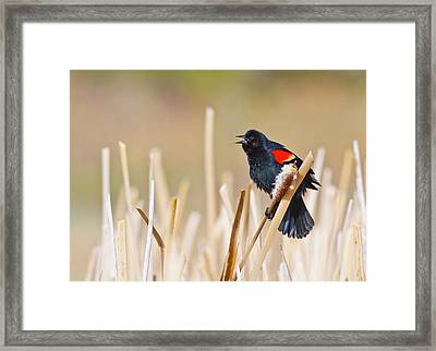 Wyoming, Sublette County, Male Framed Print by Elizabeth Boehm