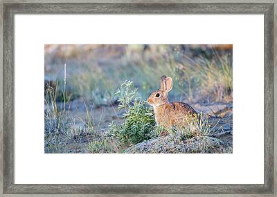 Wyoming, Sublette County, Nuttall's Framed Print by Elizabeth Boehm