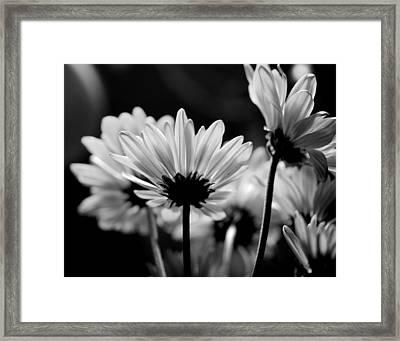X-ray Flowers Framed Print