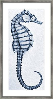 X Ray Of A Seahorse Framed Print by American School