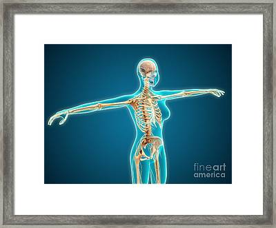 X-ray View Of Female Body Showing Framed Print by Stocktrek Images
