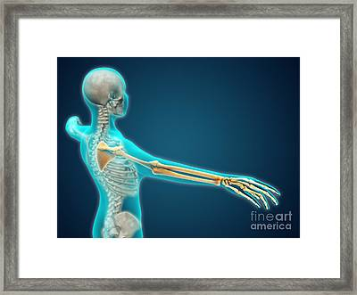 X-ray View Of Human Body Showing Framed Print