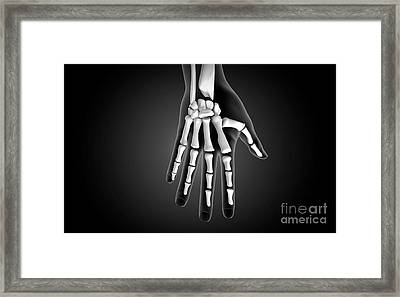 X-ray View Of Human Hand Framed Print by Stocktrek Images