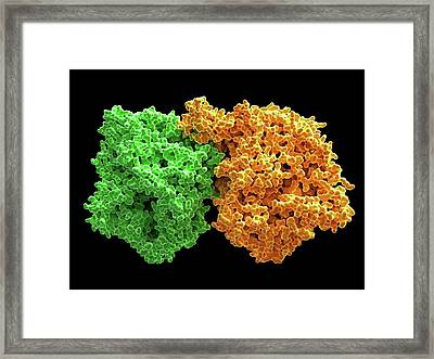 Xanthine Oxidase Framed Print