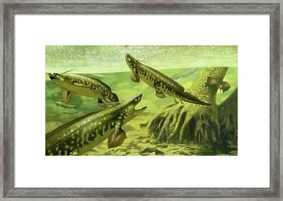 Xenacanthus Decheni Prehistoric Sharks Framed Print by Jaime Chirinos