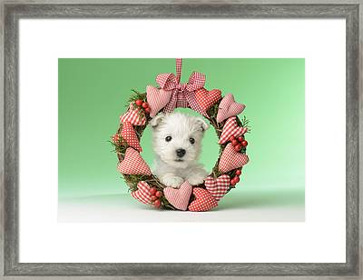Xmas Reef Puppy Framed Print