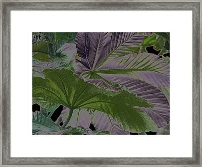 Framed Print featuring the photograph Yagrumo by Aurora Levins Morales