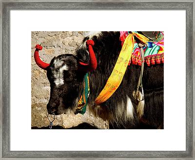Yak Wearing Knitted Decorative Horn Framed Print by Jaina Mishra
