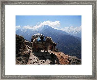 Yaks 1a Framed Print