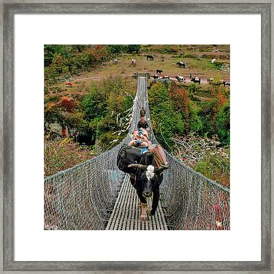 Yaks On Rope Bridge Framed Print by Babak Tafreshi