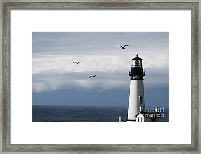 Yaquina Head Flyers Fifty Three Framed Print by Donald Sewell