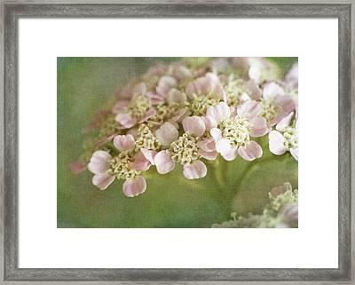 Yarrow Framed Print by David and Carol Kelly