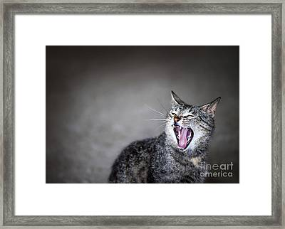 Yawning Cat Framed Print